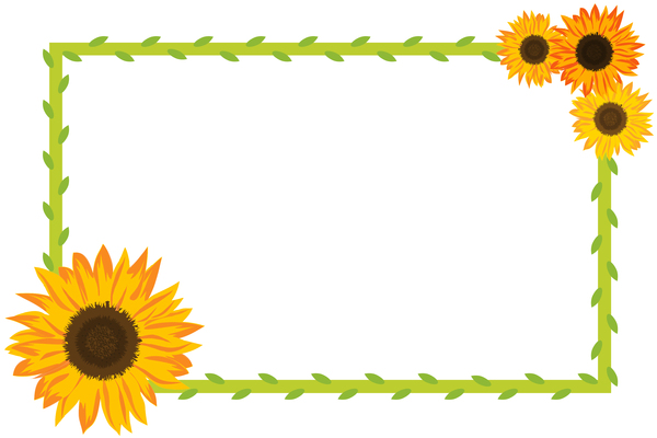 Sunflower Border 2 And Foliage On White Background