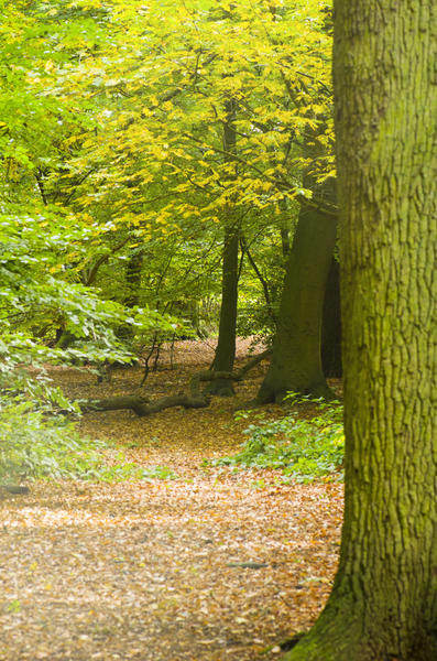 Forest path: autumn forest scene