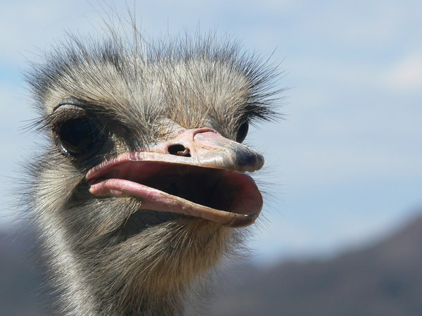Ostrich female: Promoting Revlon eye lashes