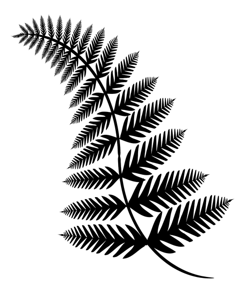 Fern 2: An illustration of a fern.