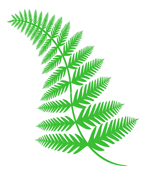 Fern 1: An illustration of a fern.