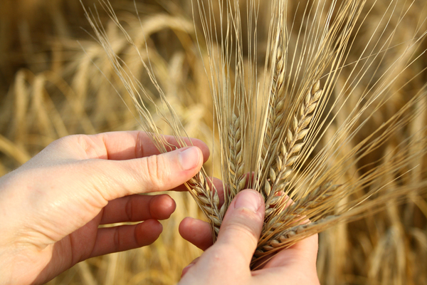 wheat in the hands: let me know if you use it :)