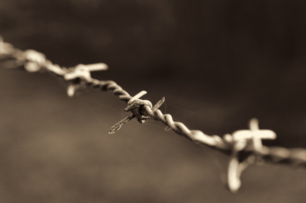 Barb wire closeup: A closeup picture of barbwire