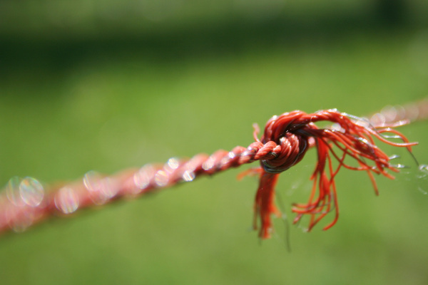 Knot in rope: A knot in a rope