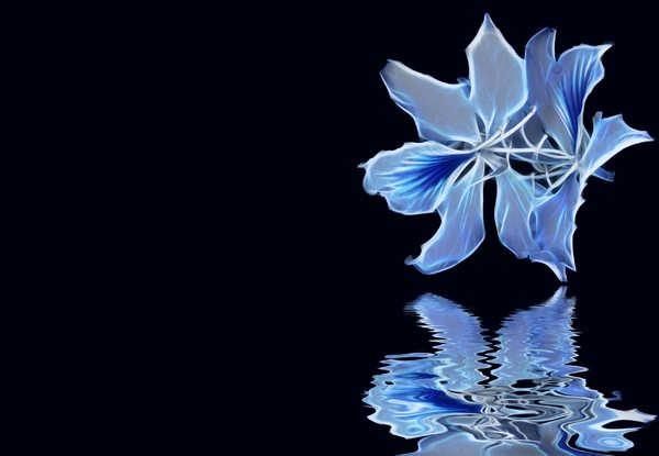 Arty Bauhinia 2: A bauhinia over water with an arty fractal effect. Just messing around and thought it might be useful. You may prefer:  http://www.rgbstock.com/photo/2dyVOWD/Bauhinia+-+Sheer+Beauty  or:  http://www.rgbstock.com/photo/2dyVKHz/White+Bauhinia+2