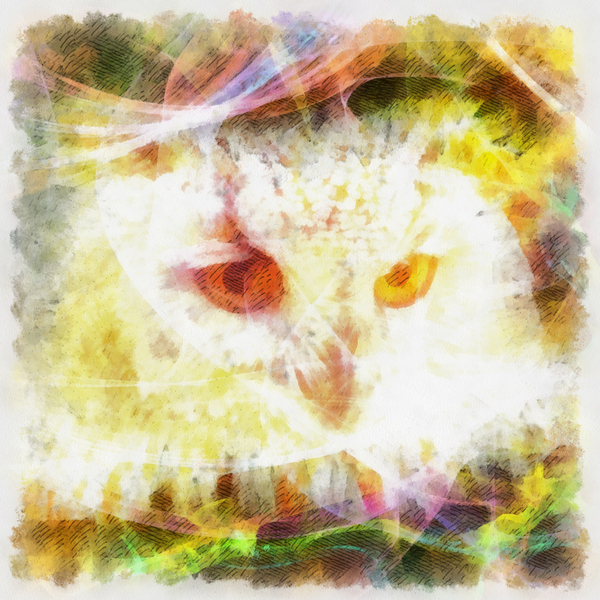 Owl: Digital owl illustration.