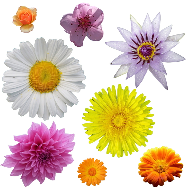 Isolated Flowers: Flower clipart.