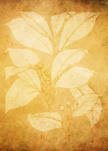 Flower background: Botanical drawing was used on parchment texture