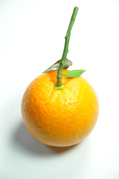 orange fruit: orange fruit