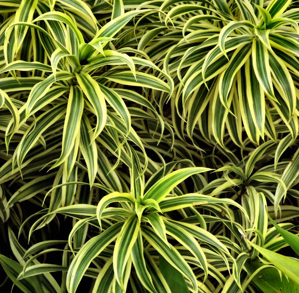 Free stock photos rgbstock free stock images green yellow foliage1 tacluda march - Leafy houseplants ...