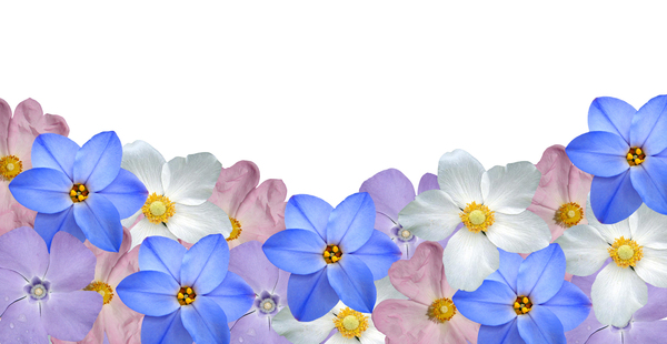 pastel border: another border this time in pastel flowers