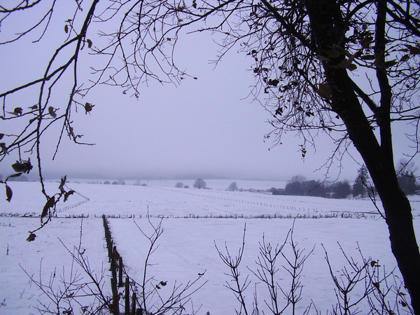 Winterscene 3: Snowy landscape in the Ardennes, Belgium