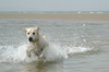 Dogs at the sea side 4