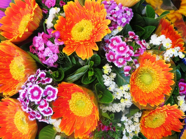 orange and purple flowers: orange and purple flowers