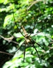 forest big spider