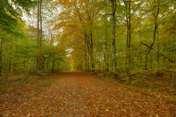 Autumn forest - HDR: Forest in autumn colors. The image is HDR.