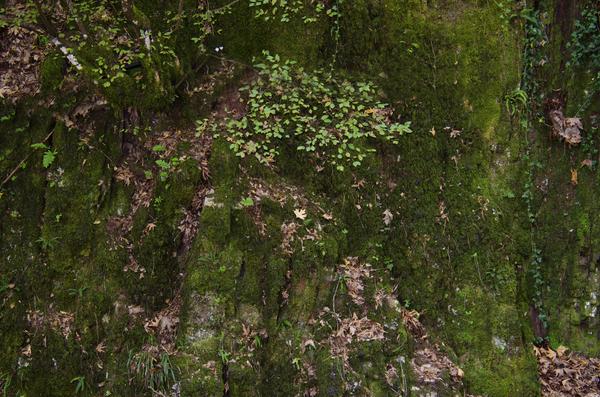 Gratis stock foto 39 s rgbstock gratis afbeeldingen planten op een helling kimolos - Tuinmeubilair op een helling ...