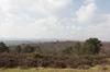 Heathland and forest