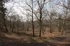Heathland forest