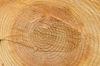 Woodland logs