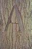 Letter on tree bark