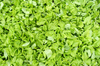 young lettuce texture