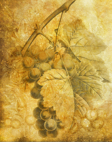 Botanical background: Several layers of botanical drawing was used
