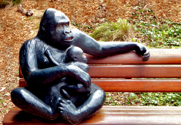 out of their enclosure13: replica zoo creatures for display and tactile experience - gorilla & baby