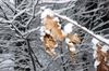 snowy_branches_03